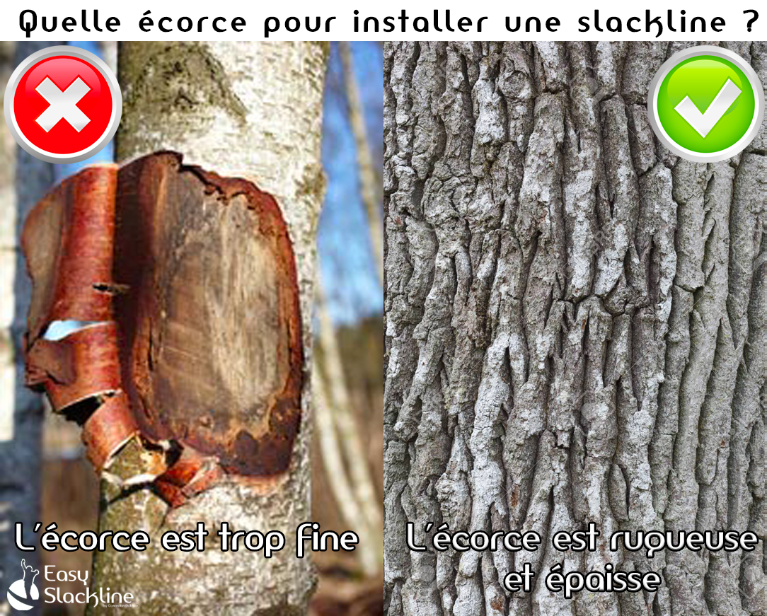 Quelle écorce pour installer slackline ?