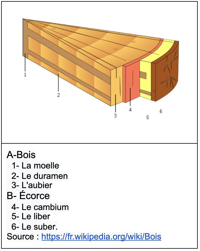 Schéma de la composition d'un tronc d'arbre